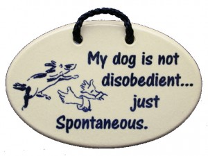 My dog is not disobedient he's just dog spontaneous